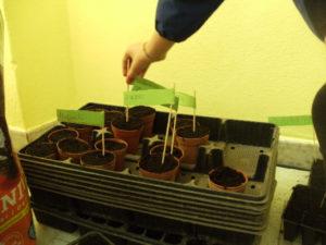 Prepariamo il semenzaio a scuola: ognuno sperimenta e pianta un seme